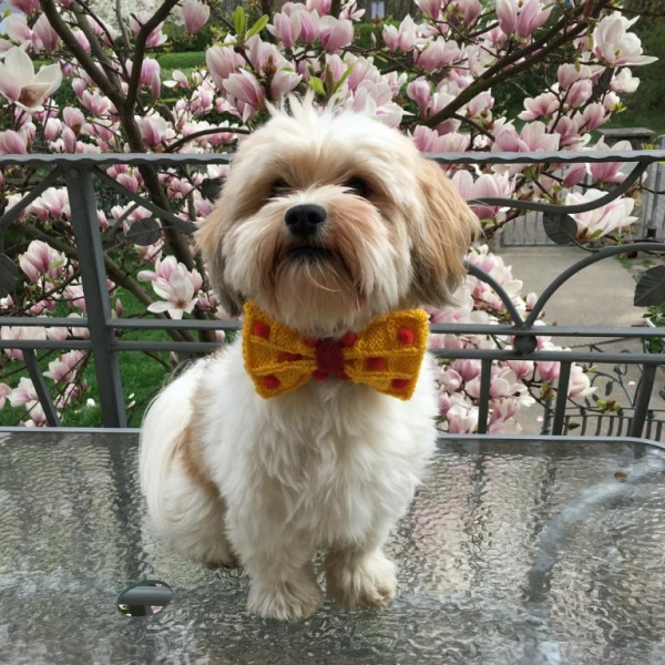 West welcomes spring in our bow tie